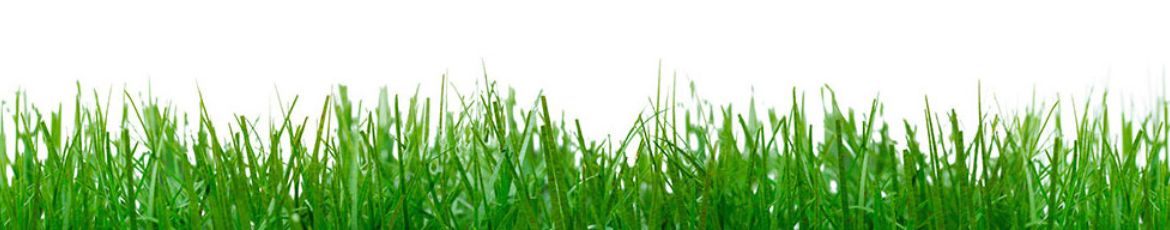 Turf grass as an important application for Mycorrhiza.
